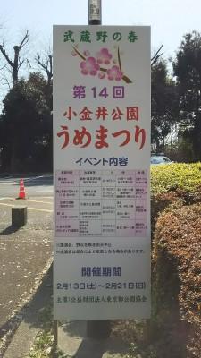 梅まつり2016-イベント