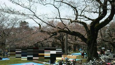 桜まつり2日目